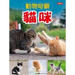 動物奇觀:貓咪